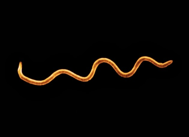 Borelioza – choroba z Lyme